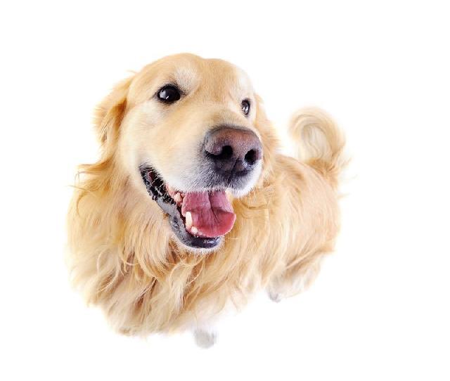 Estudo investiga o câncer em cães