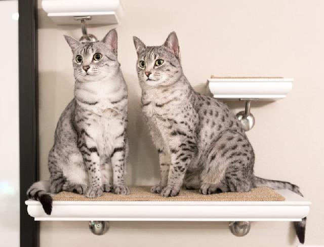 evitar-acidentes-com-gatos
