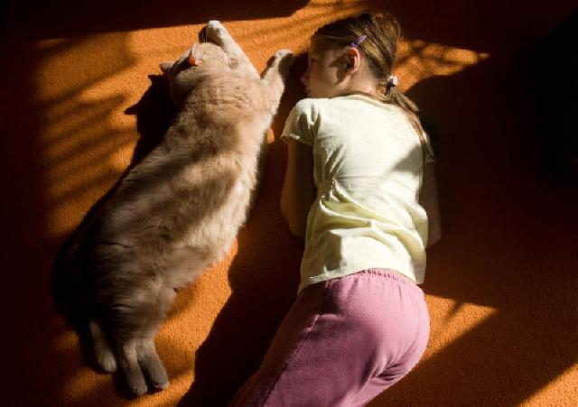 felinos-criancas