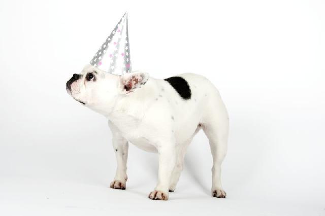 festa-para-cachorro