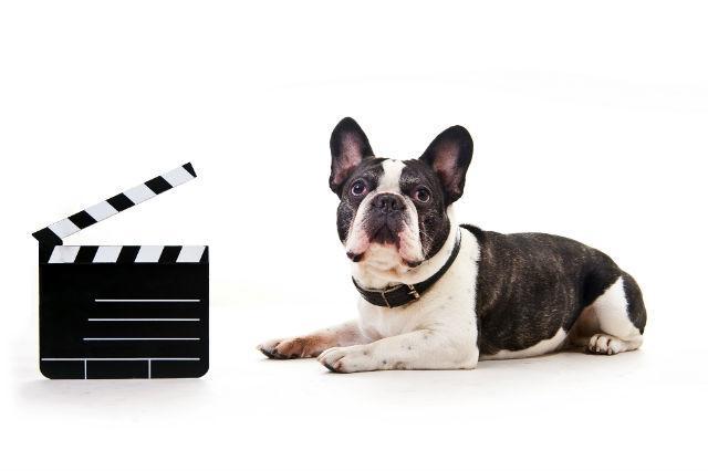 Filmes com animais