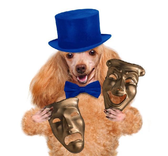 Filmes com Cães