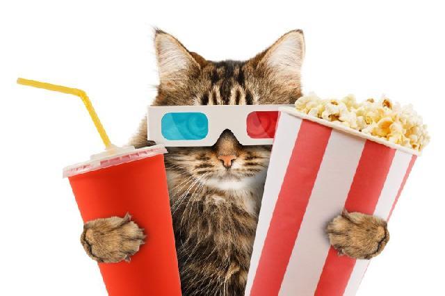 filmes-com-gatos