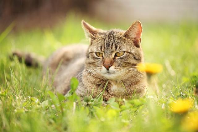 florais-para-caes-gatos