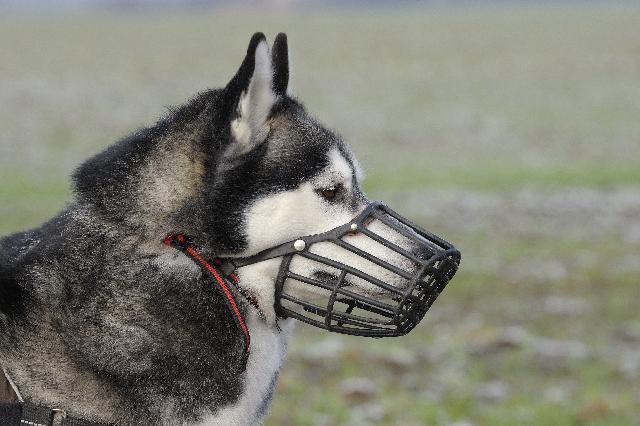Focinheiras para cães