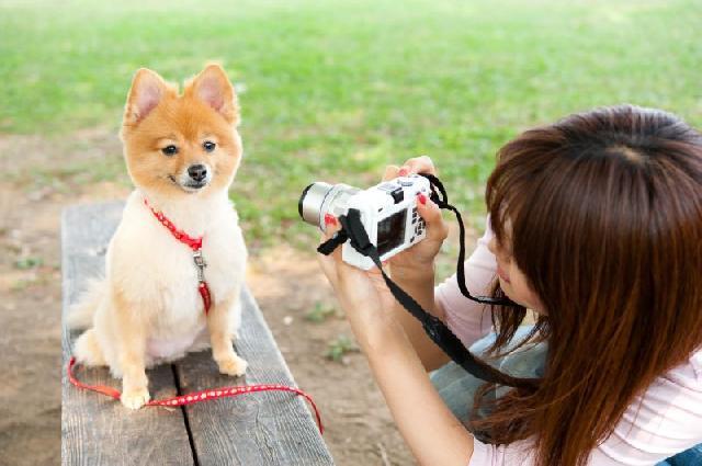 fotos-cachorro