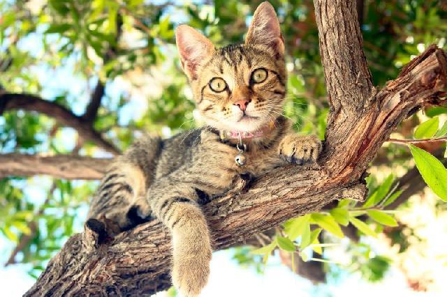 fotos-gatinhos-arvore