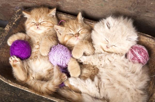 fotos-gatinhos-bolas-la