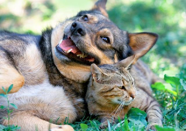fotos-gatinhos-com-cachorros