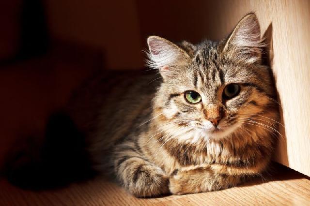 fotos-gatinhos-dentro-caixa