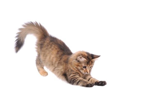 fotos-gatinhos-estudio