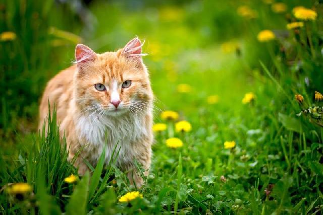 fotos-gatinhos-jardim