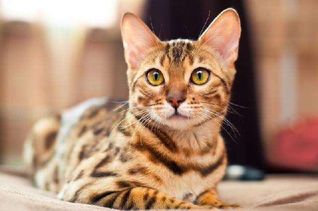 fotos-gatinhos-malhados