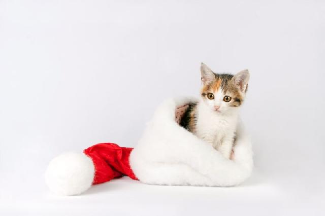 fotos-gatinhos-natal