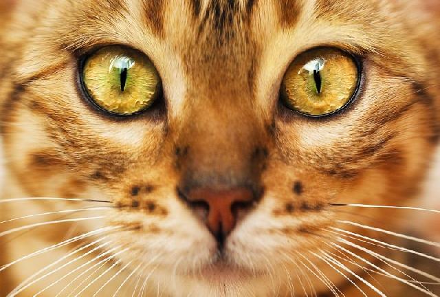 fotos-gatinhos-olhos-amarelos