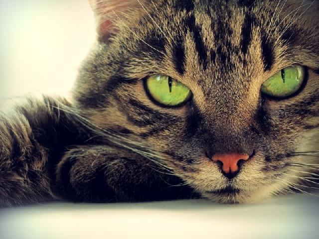 fotos-gatinhos-olhos-verdes