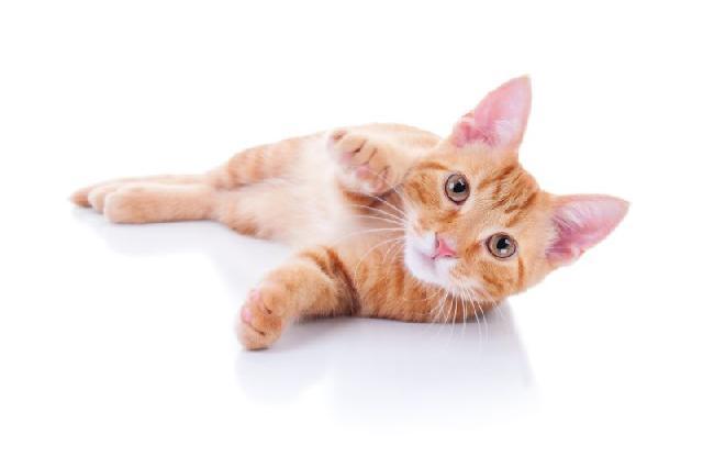 fotos-gatinhos-pata