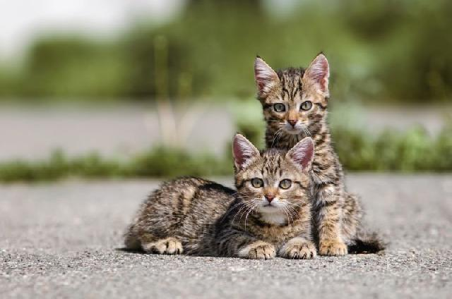 fotos-gatinhos-rua