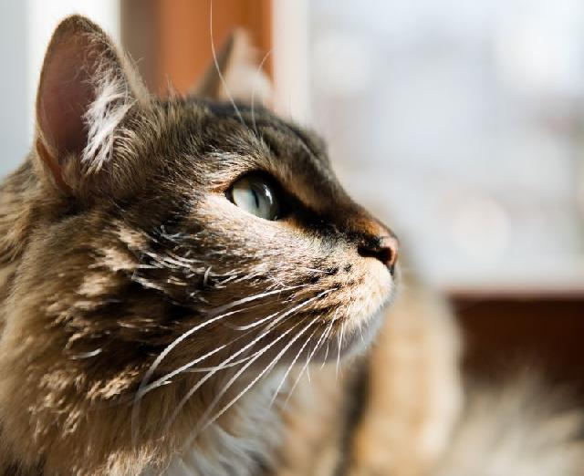 fotos-gatinhos-sol