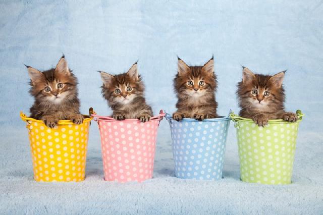 fotos-gatinhos-vaso