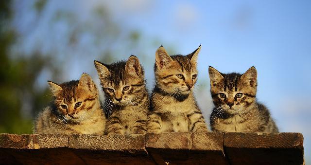 Fotos dos Gatinhos
