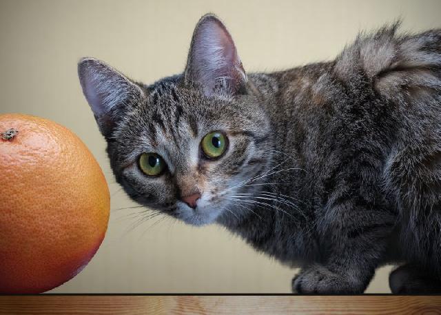 frutas-para-gatos