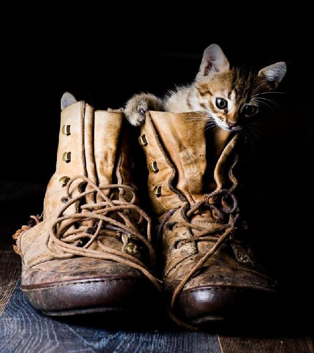 gato-botas-desenho