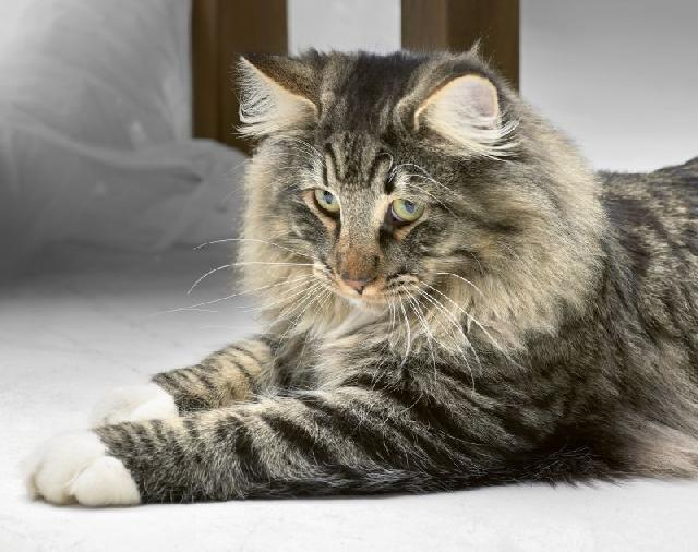 gato-botas-filme
