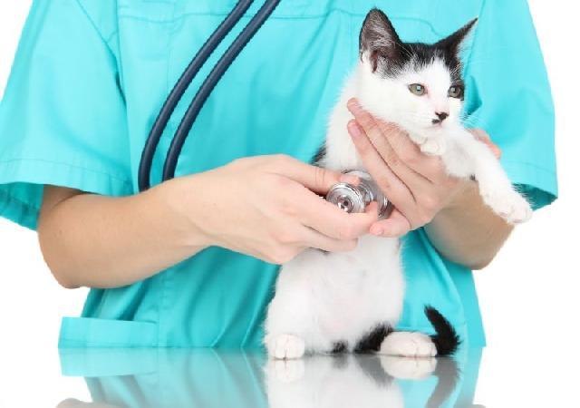 gato-com-gripe