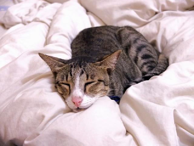 gato-doente