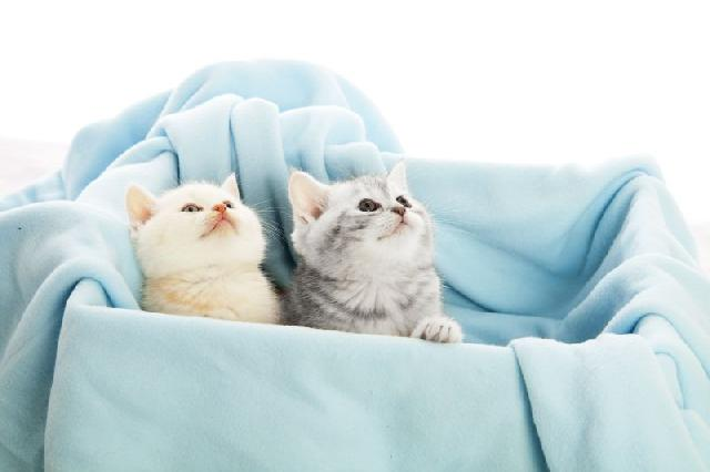 gato-filhote-toma-leite