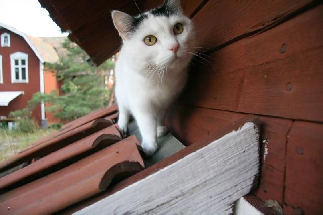 gato-independente