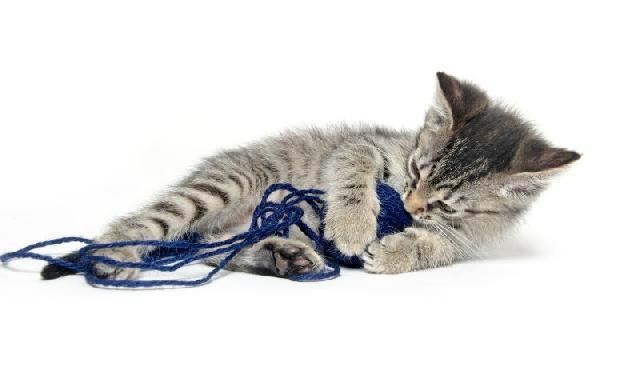 gato-mia-motivos