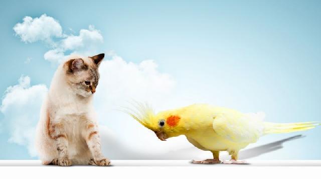 gato-passarinho
