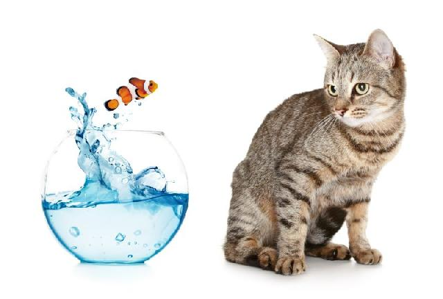 gato-tem-medo-agua