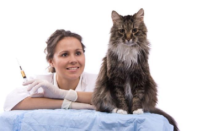 gato-tomando-vacina