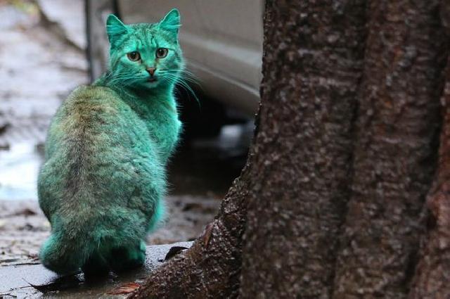 Felino com pelagem verde circula por balneário búlgaro