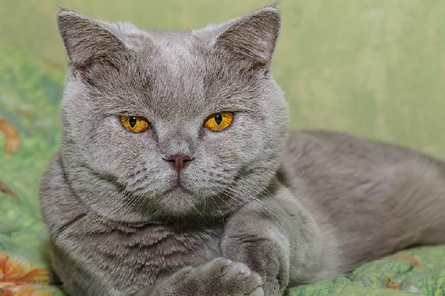 universo dos gatos