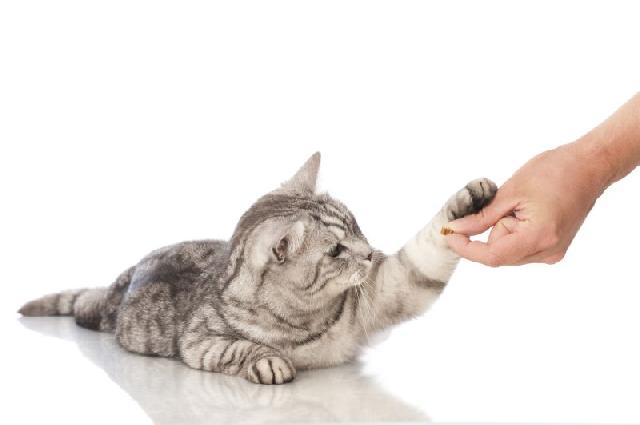 gatos-ariscos