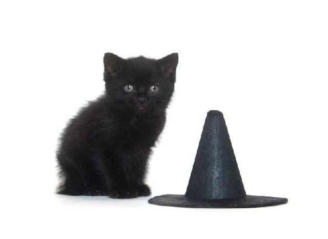 gatos-bruxas