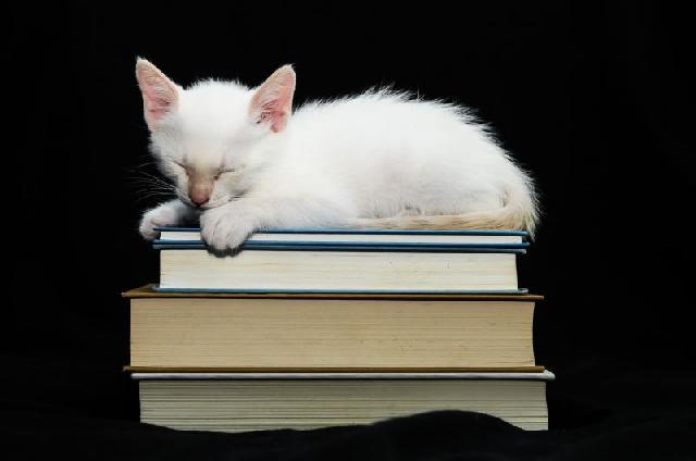 Gatos incentivam a leitura de crianças nos EUA
