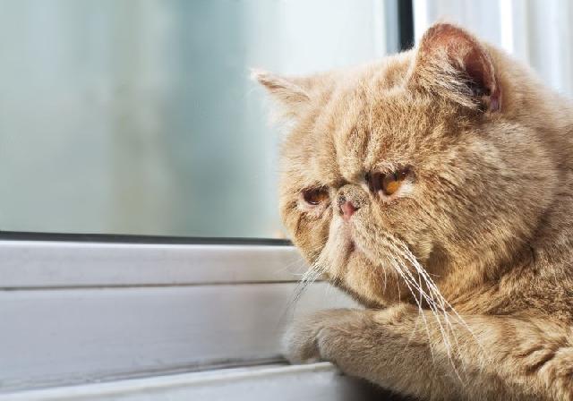 gatos-depressivos