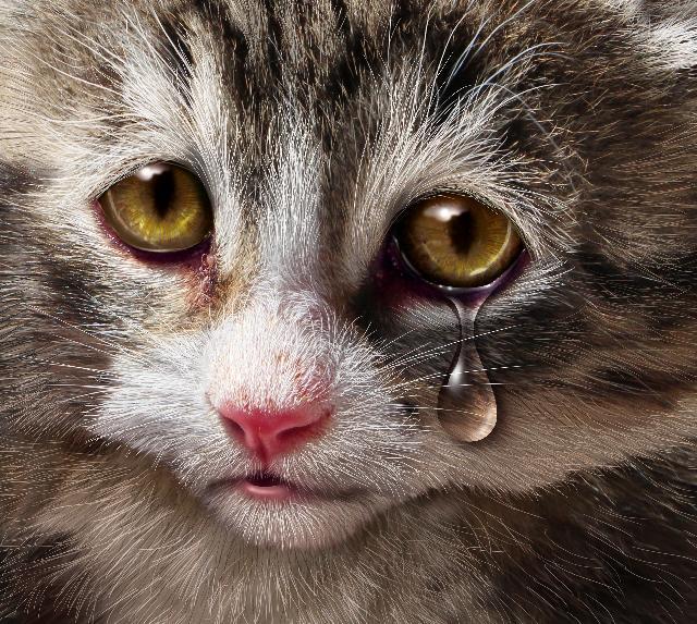Gatos envenenados são encontrados mortos na Bahia