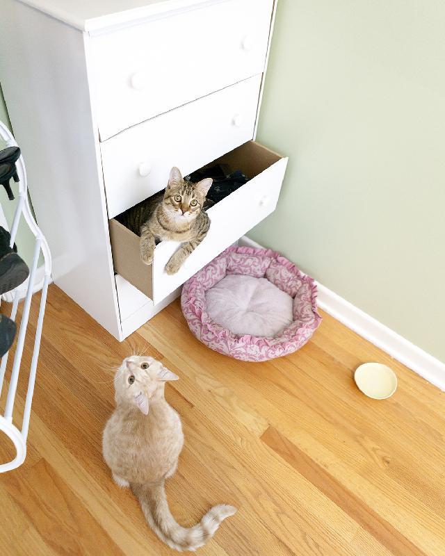 Gatos para apartamento