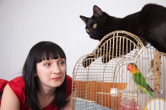 gatos-passaros