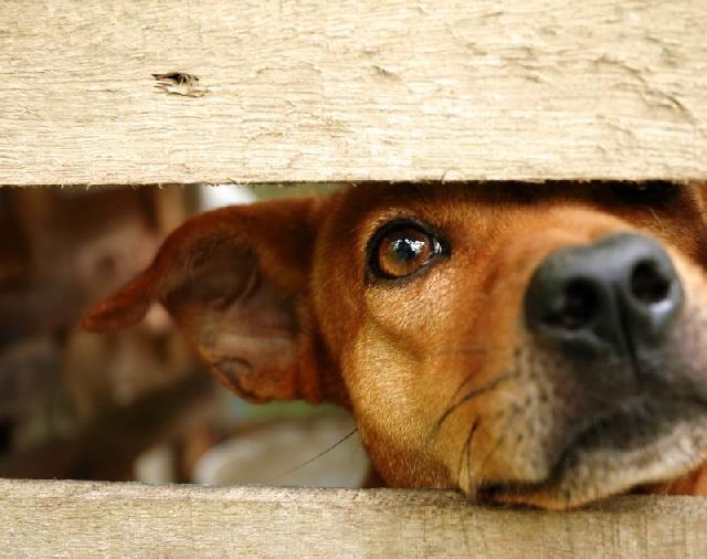 Grade de Porta para Cães