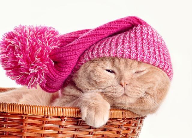 gripe-gatos