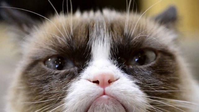 A gatinha conhecida como Grumpy Cat
