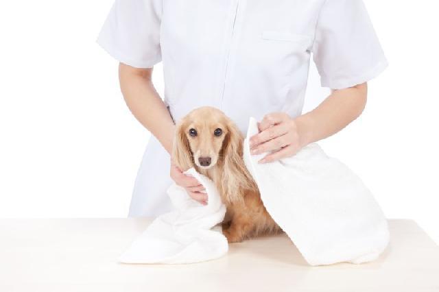 higiene-cachorros-gatos