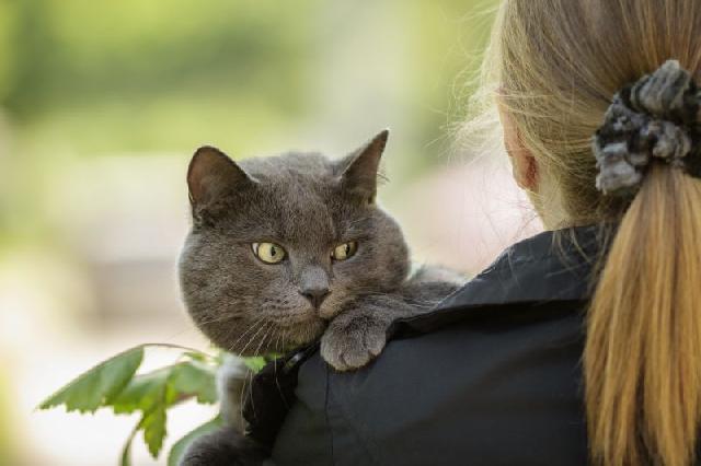 Gato idoso cuidados especiais cachorrogato - Cuidados gato 1 mes ...